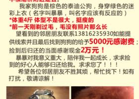 寻狗启示,浦东机场镇江镇丢失一只棕色小泰迪穿着迷彩上衣,它是一只非常可爱的宠物狗狗,希望它早日回家,不要变成流浪狗。