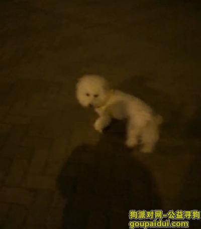 寻狗启示,1月15日晚八点成都龙泉驿航天星河名居附近走失白色比熊,走失时身上套着黄色牵引绳,它是一只非常可爱的宠物狗狗,希望它早日回家,不要变成流浪狗。