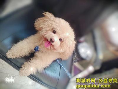 邵阳寻狗,2019年1月10日于江北广场佳慧附丢失爱狗,它是一只非常可爱的宠物狗狗,希望它早日回家,不要变成流浪狗。