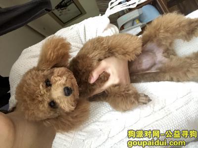 寻狗启示,闹闹天冷 你快回家吧,它是一只非常可爱的宠物狗狗,希望它早日回家,不要变成流浪狗。
