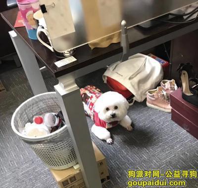 寻狗启示,上海宝山区新沪路大华二路馨华苑十五岁寻找比熊,它是一只非常可爱的宠物狗狗,希望它早日回家,不要变成流浪狗。