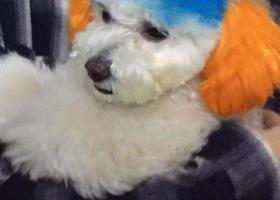 寻狗启示,南岗区和兴路和林兴路道口捡到,它是一只非常可爱的宠物狗狗,希望它早日回家,不要变成流浪狗。