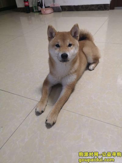寻狗启示,丢失一只六个月的狗狗,它是一只非常可爱的宠物狗狗,希望它早日回家,不要变成流浪狗。