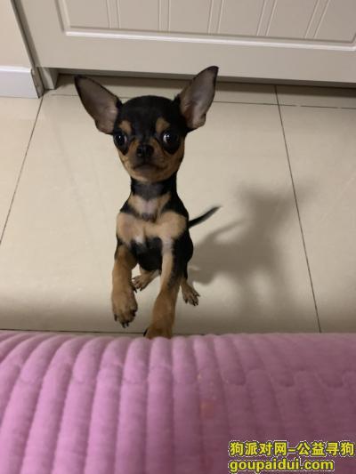寻狗启示,2019年1月17日中午11点27分被人在自家院内抱走,它是一只非常可爱的宠物狗狗,希望它早日回家,不要变成流浪狗。