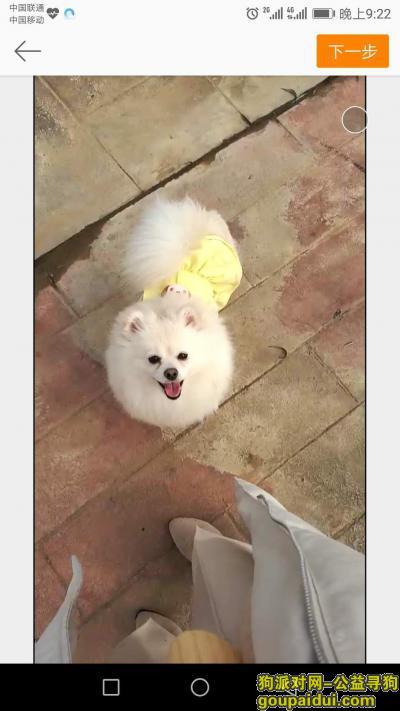 寻狗启示,白色小型犬博美寻找,希望有心人对它好点,它是一只非常可爱的宠物狗狗,希望它早日回家,不要变成流浪狗。