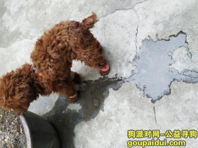 ,1.20下午捡到泰迪狗,位置虢镇小学附近,它是一只非常可爱的宠物狗狗,希望它早日回家,不要变成流浪狗。