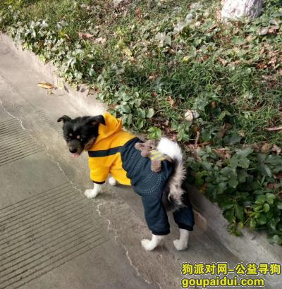攀枝花寻狗启示,小黑,天黑了,你快点回家你!,它是一只非常可爱的宠物狗狗,希望它早日回家,不要变成流浪狗。