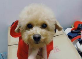 寻狗启示,荔湾区寻找爱犬  好人一生平安,它是一只非常可爱的宠物狗狗,希望它早日回家,不要变成流浪狗。