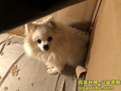 ,开封狗狗走失,找到定重谢!,它是一只非常可爱的宠物狗狗,希望它早日回家,不要变成流浪狗。