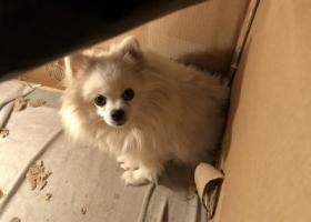 寻狗启示,开封狗狗走失,找到定重谢!,它是一只非常可爱的宠物狗狗,希望它早日回家,不要变成流浪狗。