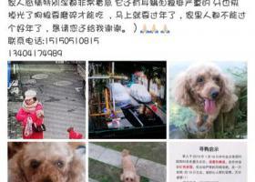 寻狗启示,在建邺区南湖文体西村丢狗,它是一只非常可爱的宠物狗狗,希望它早日回家,不要变成流浪狗。