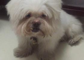 寻狗启示,开元山庄西区走丢一只高龄老狗,5000元重金酬谢,它是一只非常可爱的宠物狗狗,希望它早日回家,不要变成流浪狗。