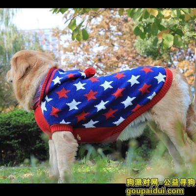 南京寻狗,,它是一只非常可爱的宠物狗狗,希望它早日回家,不要变成流浪狗。