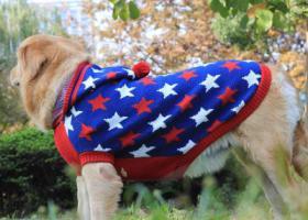 寻狗启示,无锡锡山区甘露镇找狗母金毛,它是一只非常可爱的宠物狗狗,希望它早日回家,不要变成流浪狗。