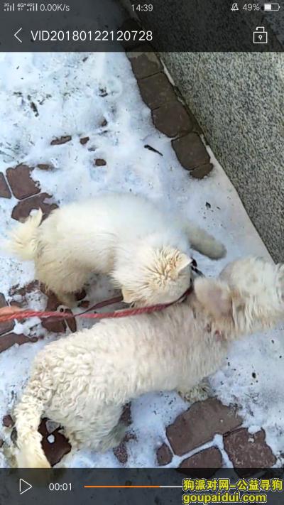 辽阳寻狗网,寻狗启示 在辽阳瓦窑子村丢的,它是一只非常可爱的宠物狗狗,希望它早日回家,不要变成流浪狗。