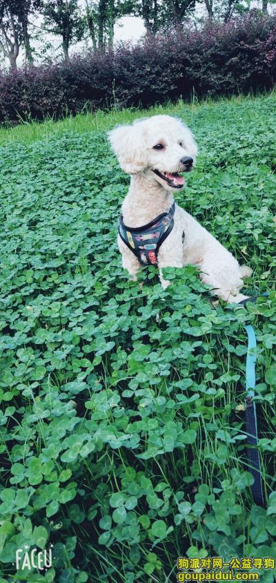 遂宁寻狗启示,四川省遂宁市物流港瑰宝明珠小区,它是一只非常可爱的宠物狗狗,希望它早日回家,不要变成流浪狗。