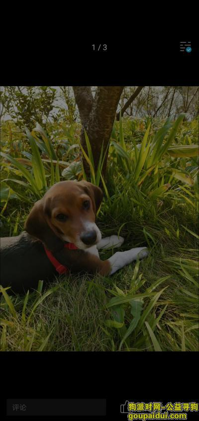 ,我想接它回家,好心人帮忙找找,它是一只非常可爱的宠物狗狗,希望它早日回家,不要变成流浪狗。