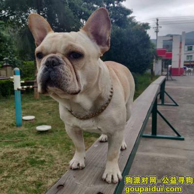 ,寻狗希望好心人看到联系一下我谢谢,它是一只非常可爱的宠物狗狗,希望它早日回家,不要变成流浪狗。