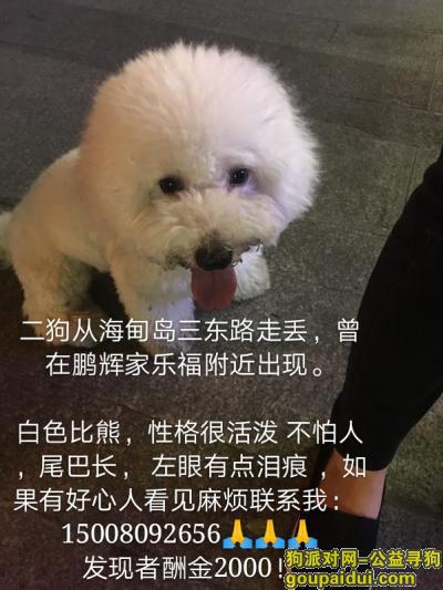 海口找狗,寻找白色比熊公狗 发现者酬金2000,它是一只非常可爱的宠物狗狗,希望它早日回家,不要变成流浪狗。