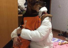寻狗启示,重庆北碚区天气广场,它是一只非常可爱的宠物狗狗,希望它早日回家,不要变成流浪狗。