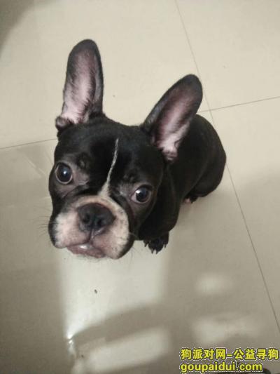 【河池找狗】,都安瑶族自治县安阳镇,我的狗狗自己跑出门至今未归,请好心人们帮忙,它是一只非常可爱的宠物狗狗,希望它早日回家,不要变成流浪狗。