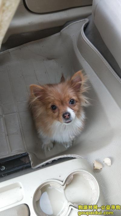 佛山寻狗主人,佛山千灯湖地铁站附近走失的黄色小狗,类似博美,它是一只非常可爱的宠物狗狗,希望它早日回家,不要变成流浪狗。