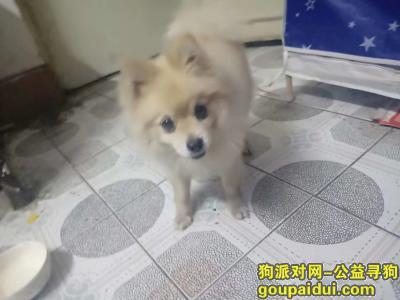 长春寻狗主人,宽城区庆丰路地铁站A口24日晚八点左右捡到一只白黄色博美,它是一只非常可爱的宠物狗狗,希望它早日回家,不要变成流浪狗。