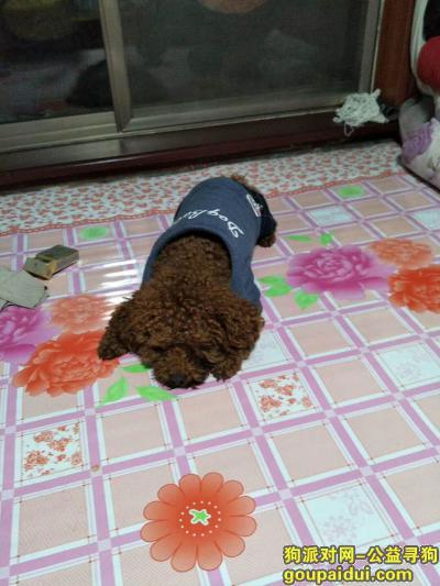 诸城寻狗,丢失泰迪狗一只,有看到请联系我,它是一只非常可爱的宠物狗狗,希望它早日回家,不要变成流浪狗。
