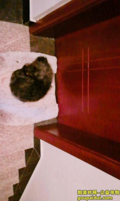 【义乌找狗】,浙江义乌寻狗 小黑 类似泰迪,它是一只非常可爱的宠物狗狗,希望它早日回家,不要变成流浪狗。