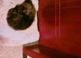 寻狗启示,浙江义乌寻狗 小黑 类似泰迪,它是一只非常可爱的宠物狗狗,希望它早日回家,不要变成流浪狗。