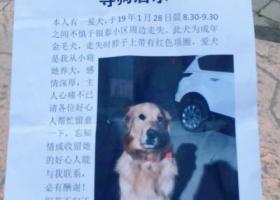 寻狗启示,请好心人帮帮忙 狗狗于28日八点半五四小学周围走失,它是一只非常可爱的宠物狗狗,希望它早日回家,不要变成流浪狗。