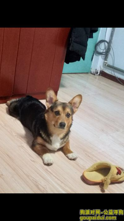 顺德寻狗启示,容桂寻狗希望有人提供信息,它是一只非常可爱的宠物狗狗,希望它早日回家,不要变成流浪狗。