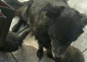 寻狗启示,狗狗1月28日中午丢失,很着急,请大家帮帮忙,找到必有重谢,它是一只非常可爱的宠物狗狗,希望它早日回家,不要变成流浪狗。