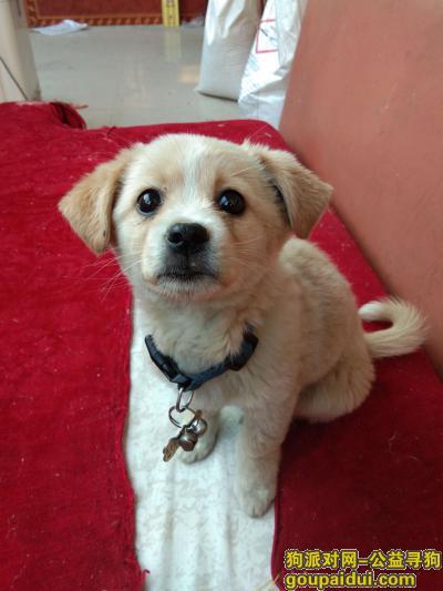 滨州找狗,这只狗对我很重要,谢谢大家,它是一只非常可爱的宠物狗狗,希望它早日回家,不要变成流浪狗。