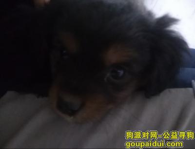 马鞍山寻狗网,捡到一只一到两月左右到狗,它是一只非常可爱的宠物狗狗,希望它早日回家,不要变成流浪狗。