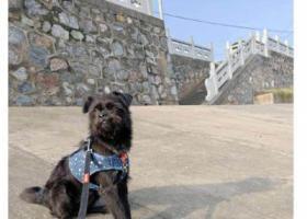 寻狗启示,常州市锦绣天地寻找黑色狗狗,它是一只非常可爱的宠物狗狗,希望它早日回家,不要变成流浪狗。