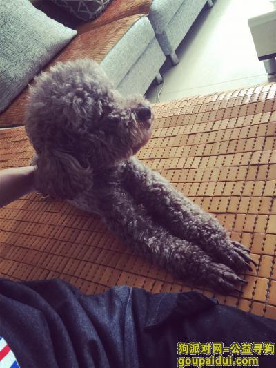 5000元重谢 寻狗,它是一只非常可爱的宠物狗狗,希望它早日回家,不要变成流浪狗。