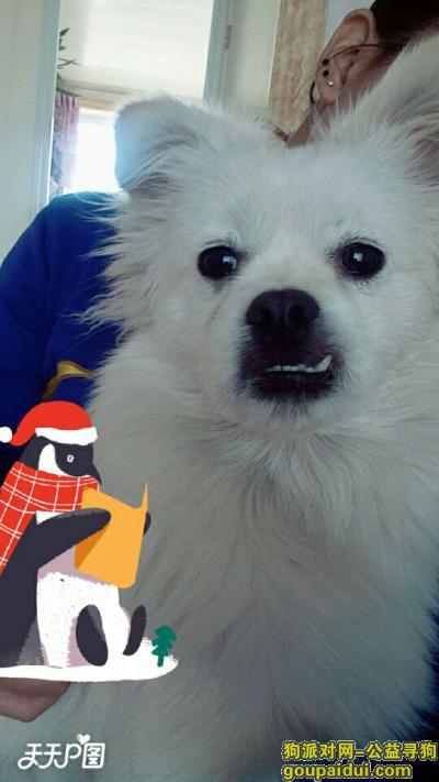 白城寻狗启示,在烧锅镇乡,丢了一只狗请看到的人通知,必有重金感谢,它是一只非常可爱的宠物狗狗,希望它早日回家,不要变成流浪狗。
