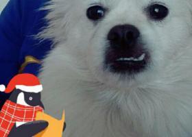 寻狗启示,在烧锅镇乡,丢了一只狗请看到的人通知,必有重金感谢,它是一只非常可爱的宠物狗狗,希望它早日回家,不要变成流浪狗。