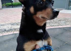 寻狗启示,李村乐客城附近丢失,家里老人难过的不吃不喝,请大家帮忙寻找,求扩散,它是一只非常可爱的宠物狗狗,希望它早日回家,不要变成流浪狗。