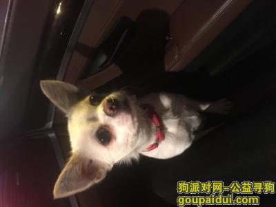 邵阳寻狗网,狗狗于2019年2月2日在邵阳市湘运大市场中午12点走失 望好心人收留 妹子万谢了!,它是一只非常可爱的宠物狗狗,希望它早日回家,不要变成流浪狗。