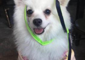 寻狗启示,悬赏、重酬!!!!!!!!!!!,它是一只非常可爱的宠物狗狗,希望它早日回家,不要变成流浪狗。