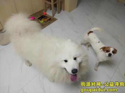九江找狗,球球,快回家吧,不要再流浪了,它是一只非常可爱的宠物狗狗,希望它早日回家,不要变成流浪狗。