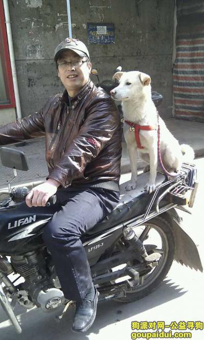 黄石寻狗启示,黄石急寻中华田园犬坨坨,它是一只非常可爱的宠物狗狗,希望它早日回家,不要变成流浪狗。