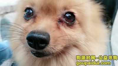 ,帮忙寻找爱犬,定有重谢,它是一只非常可爱的宠物狗狗,希望它早日回家,不要变成流浪狗。