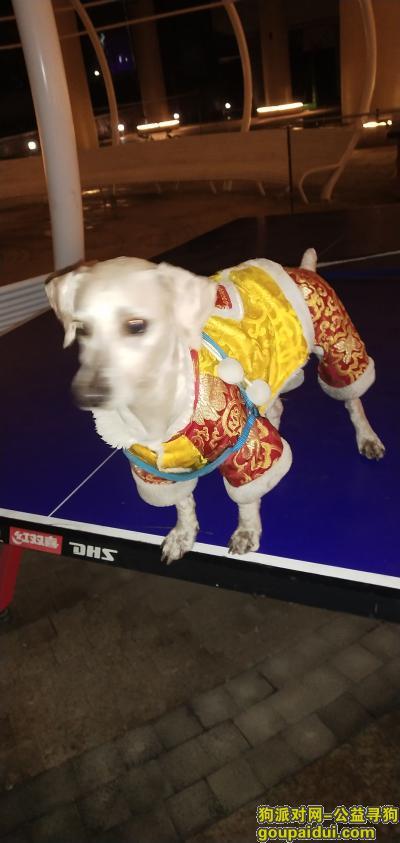 温州找狗主人,走失得狗狗,忘主人看到。主动联系我,它是一只非常可爱的宠物狗狗,希望它早日回家,不要变成流浪狗。