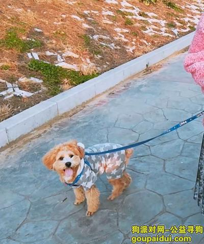 信阳寻狗,好心人有人见到我家狗狗不?今天下午跑丢了,它是一只非常可爱的宠物狗狗,希望它早日回家,不要变成流浪狗。
