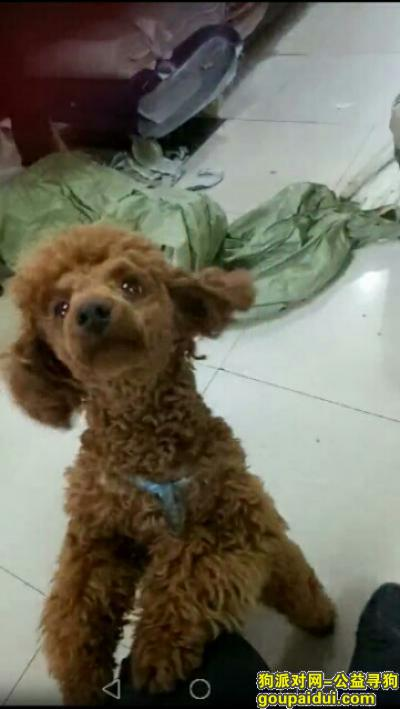 ,寻找爱犬妞妞,请湘潭的朋友帮忙留意,谢谢,它是一只非常可爱的宠物狗狗,希望它早日回家,不要变成流浪狗。