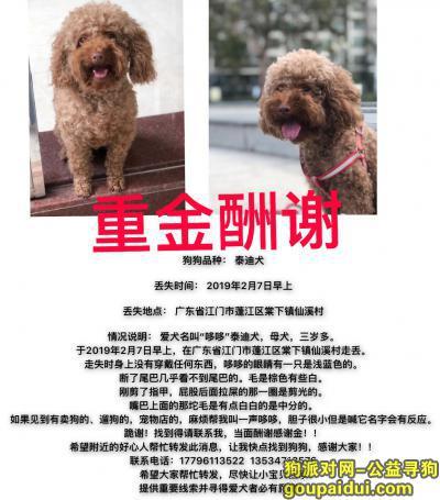 寻狗启示,重酬寻狗!!贵宾犬 三岁女孩 谢谢!!,它是一只非常可爱的宠物狗狗,希望它早日回家,不要变成流浪狗。