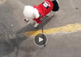 寻狗启示,寻狗启示  传递爱心  帮助寻回爱犬  当面酬谢,它是一只非常可爱的宠物狗狗,希望它早日回家,不要变成流浪狗。
